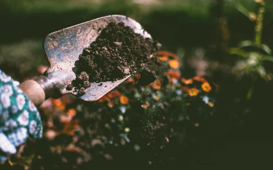 Don't Treat Your Soil Like Dirt